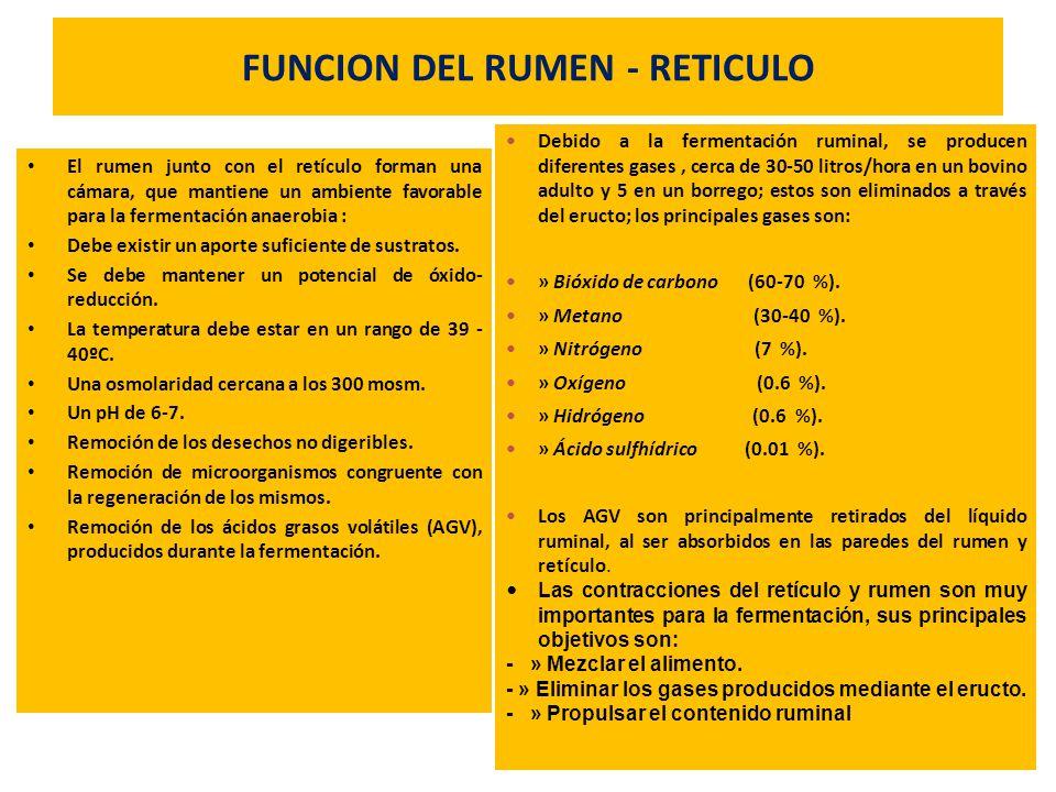 FUNCION DEL RUMEN - RETICULO