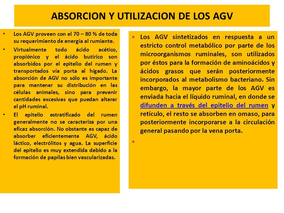 ABSORCION Y UTILIZACION DE LOS AGV