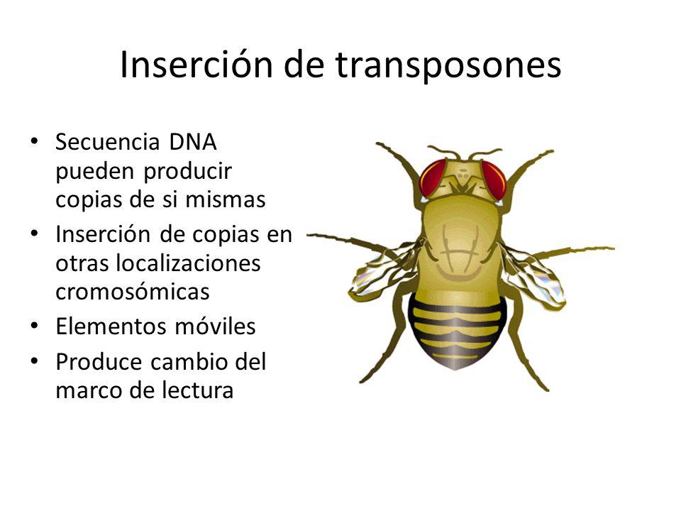 Inserción de transposones