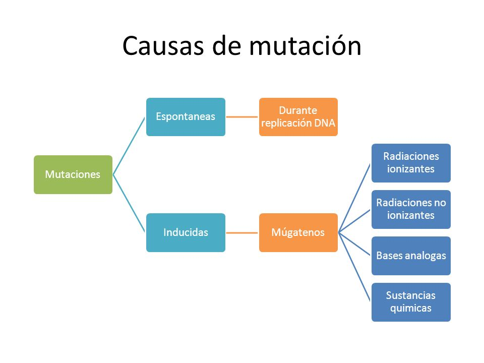 Causas de mutación Mutaciones Espontaneas Durante replicación DNA