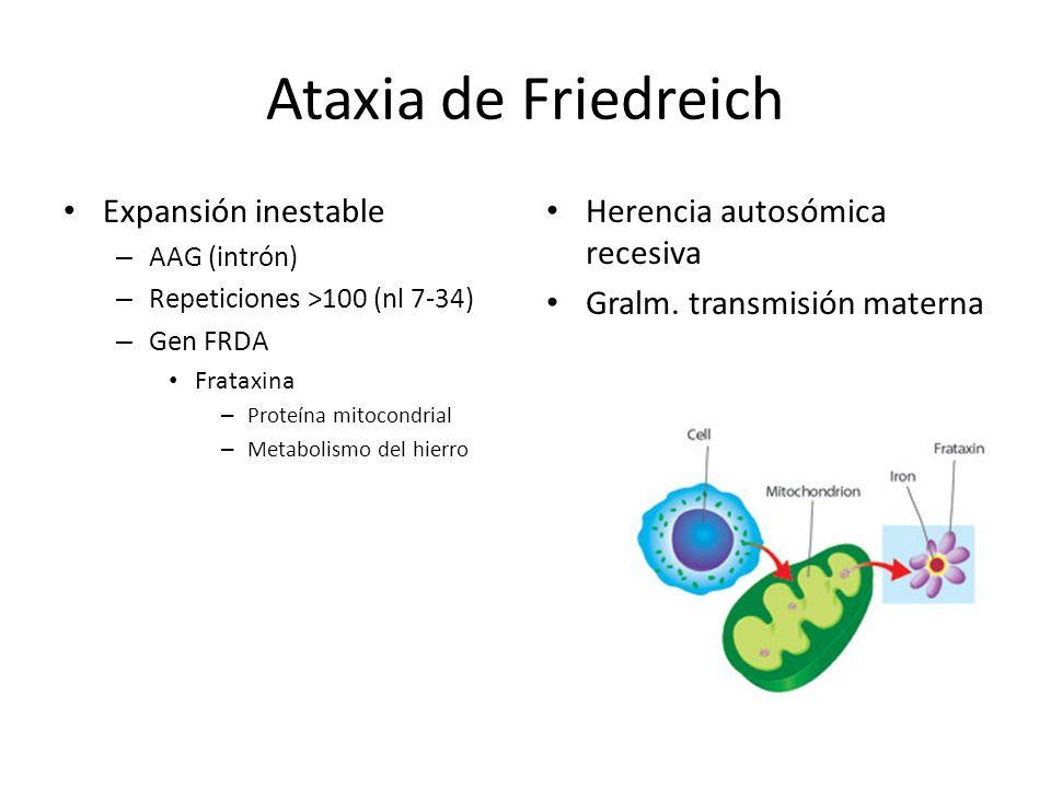 Ataxia de Friedreich Expansión inestable Herencia autosómica recesiva