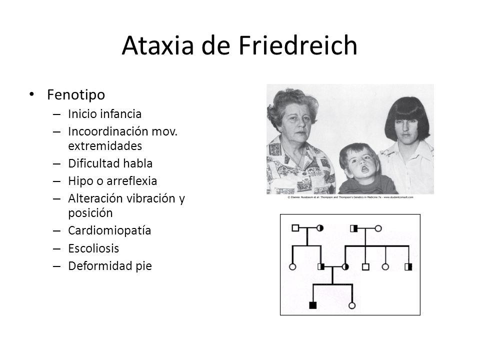 Ataxia de Friedreich Fenotipo Inicio infancia
