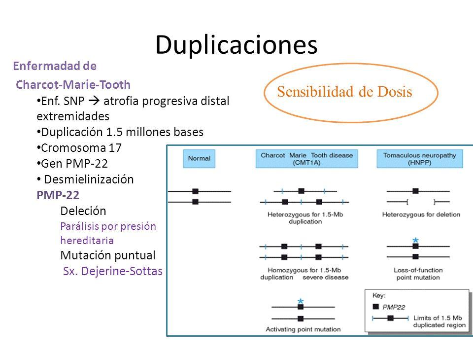 Duplicaciones Sensibilidad de Dosis Enfermadad de Charcot-Marie-Tooth