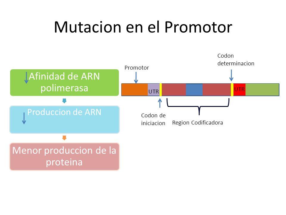 Mutacion en el Promotor
