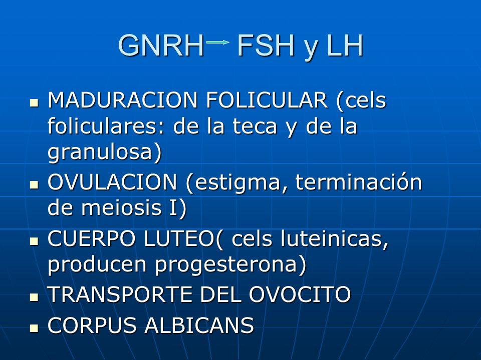 GNRH FSH y LH MADURACION FOLICULAR (cels foliculares: de la teca y de la granulosa) OVULACION (estigma, terminación de meiosis I)