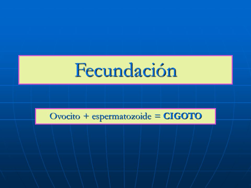Ovocito + espermatozoide = CIGOTO