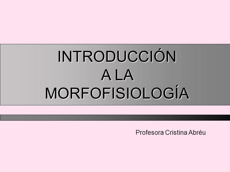 Profesora Cristina Abréu