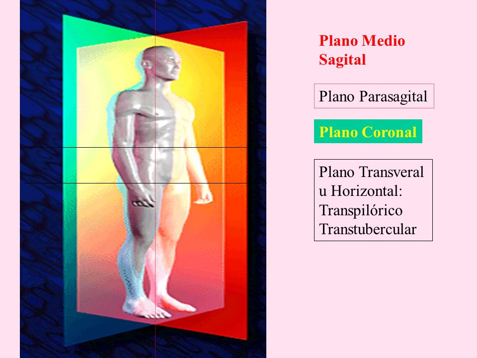 Plano MedioSagital. Plano Parasagital. Plano Coronal. Plano Transveral. u Horizontal: Transpilórico.