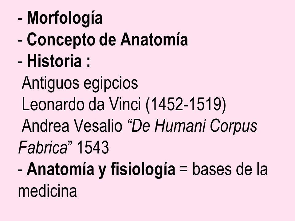Morfología - Concepto de Anatomía - Historia : Antiguos egipcios Leonardo da Vinci (1452-1519) Andrea Vesalio De Humani Corpus Fabrica 1543 - Anatomía y fisiología = bases de la medicina
