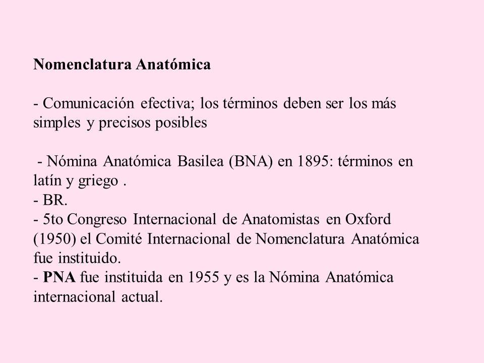 Nomenclatura Anatómica - Comunicación efectiva; los términos deben ser los más simples y precisos posibles - Nómina Anatómica Basilea (BNA) en 1895: términos en latín y griego .