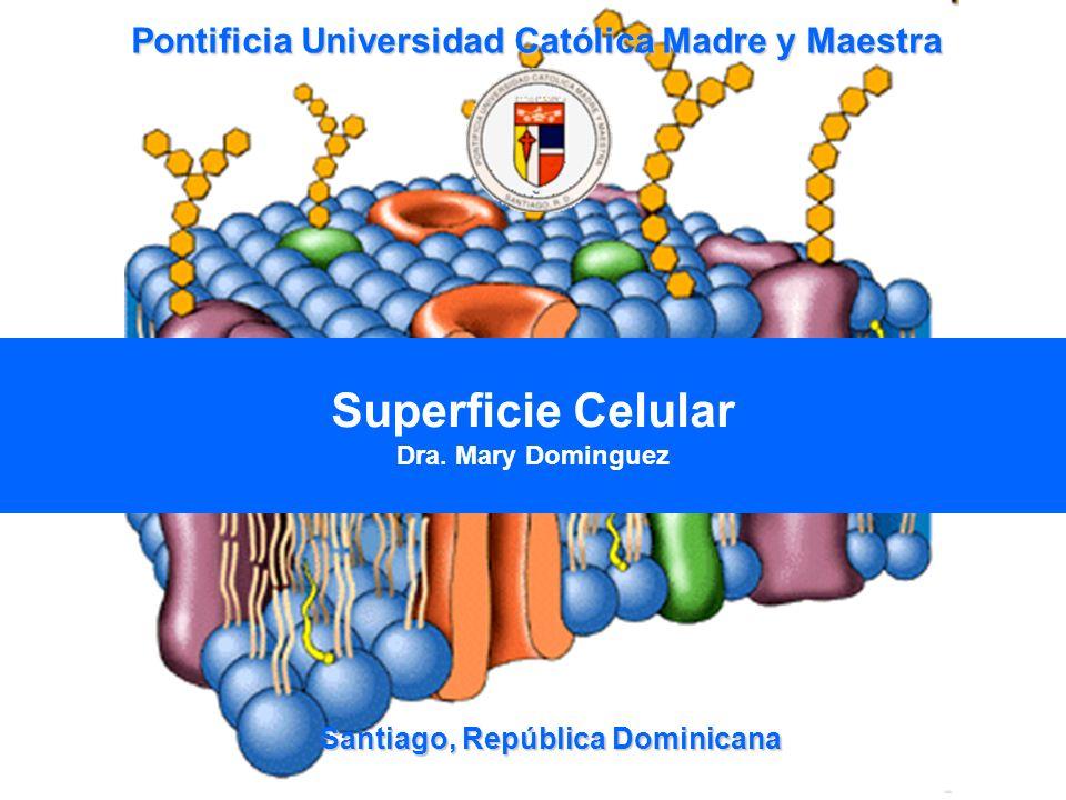 Santiago, República Dominicana Superficie Celular Dra. Mary Dominguez