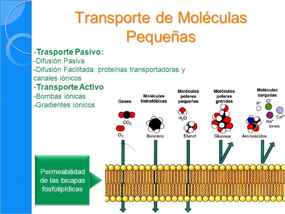 Transporte de Moléculas Pequeñas