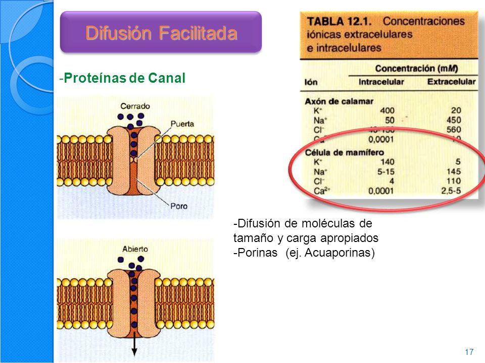 Difusión Facilitada Proteínas de Canal