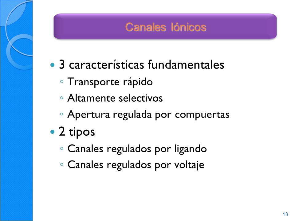 3 características fundamentales
