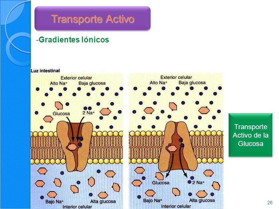 Transporte Activo de la Glucosa
