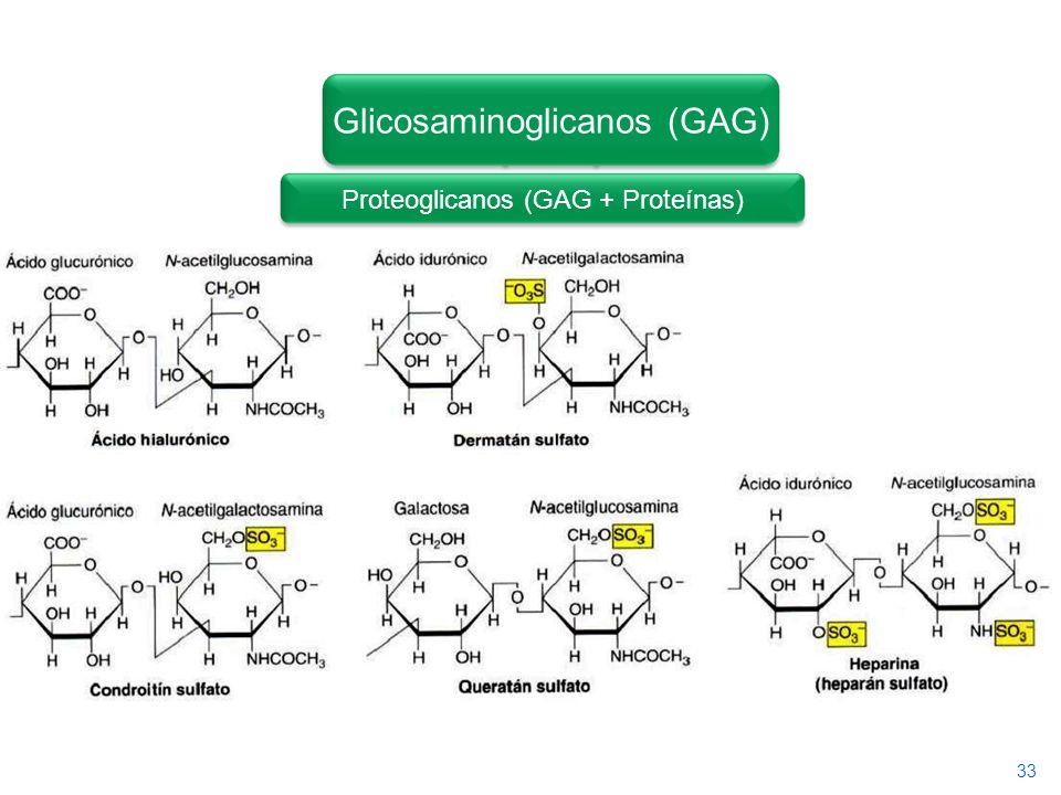 Glicosaminoglicanos (GAG)