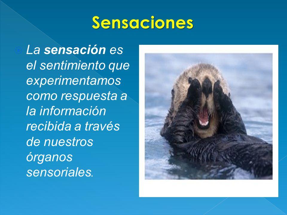 Sensaciones La sensación es el sentimiento que experimentamos como respuesta a la información recibida a través de nuestros órganos sensoriales.