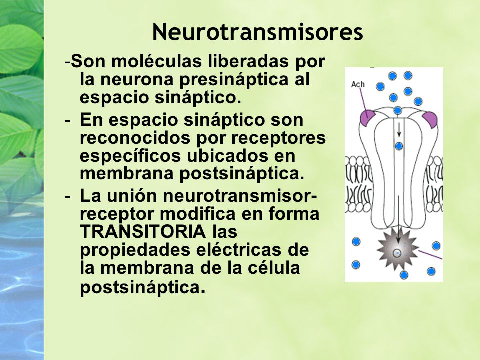 Neurotransmisores -Son moléculas liberadas por la neurona presináptica al espacio sináptico.