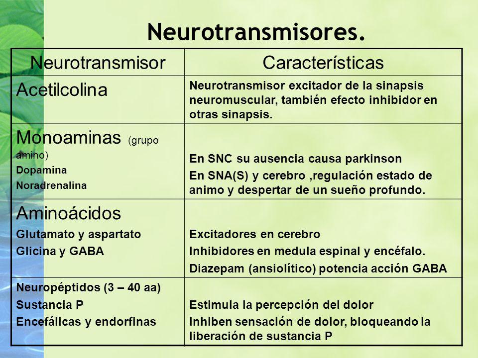 Neurotransmisores. Neurotransmisor Características Acetilcolina