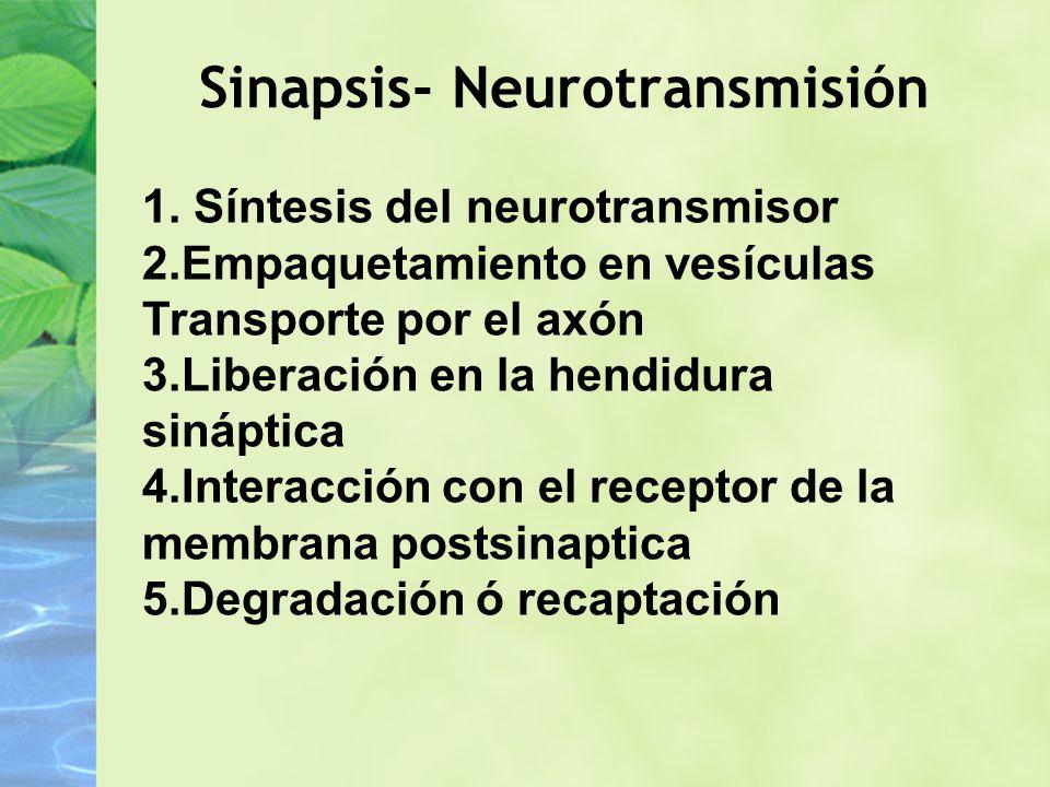 Sinapsis- Neurotransmisión