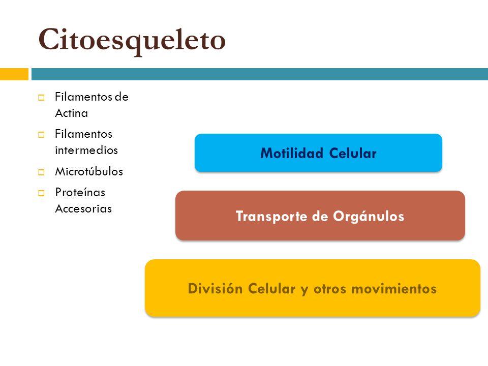 Transporte de Orgánulos División Celular y otros movimientos