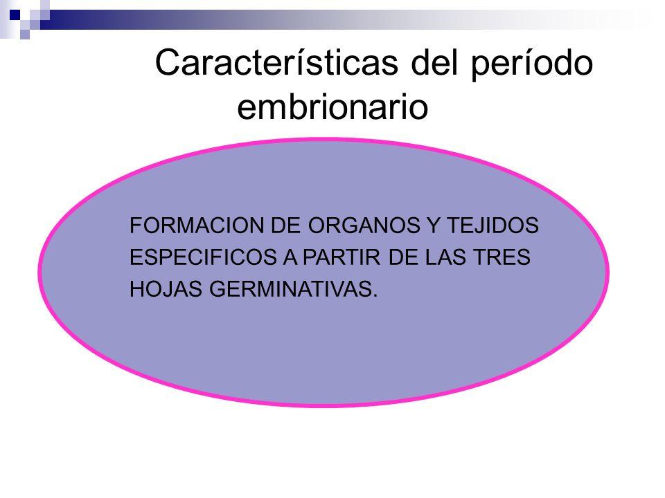 Características del período embrionario