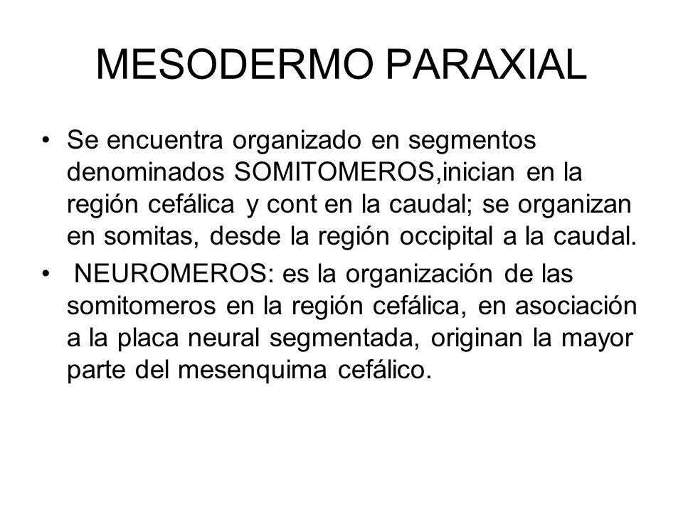 MESODERMO PARAXIAL