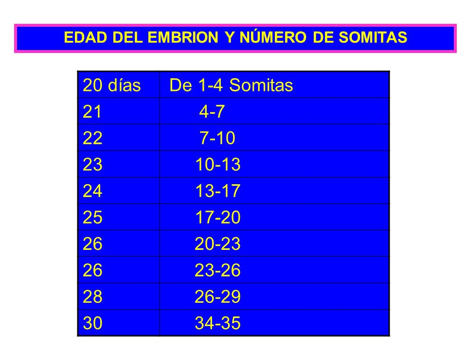 EDAD DEL EMBRION Y NÚMERO DE SOMITAS