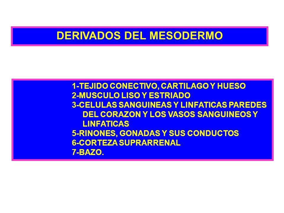 DERIVADOS DEL MESODERMO