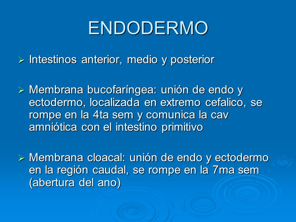 ENDODERMO Intestinos anterior, medio y posterior