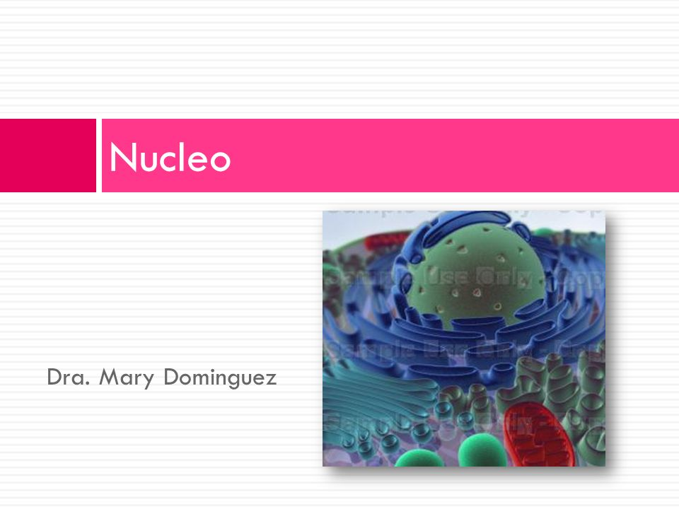 Nucleo Dra. Mary Dominguez
