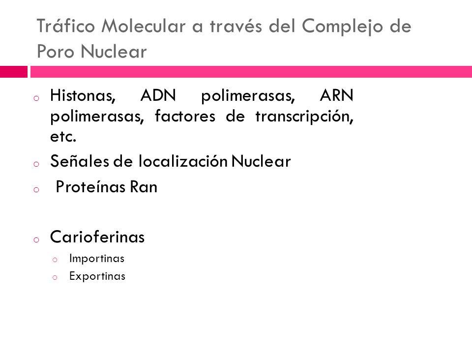 Tráfico Molecular a través del Complejo de Poro Nuclear