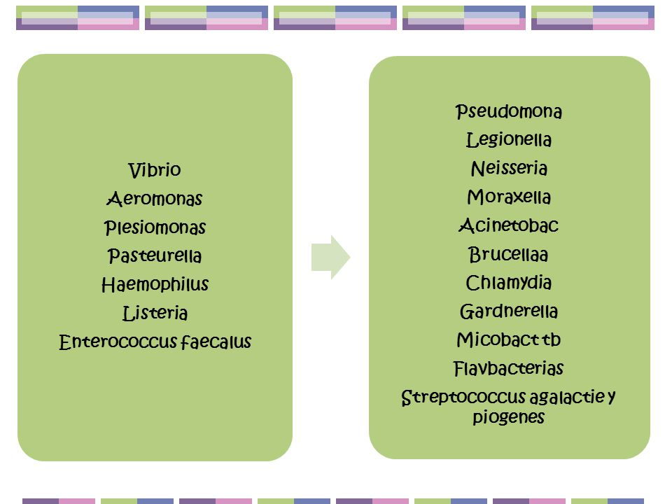 Enterococcus faecalus Streptococcus agalactie y piogenes