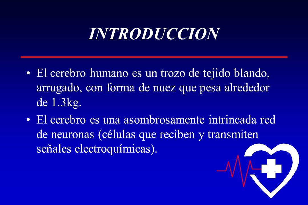 INTRODUCCION El cerebro humano es un trozo de tejido blando, arrugado, con forma de nuez que pesa alrededor de 1.3kg.