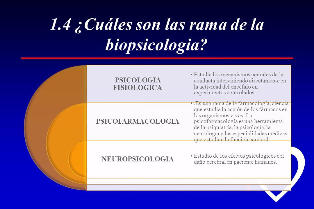 1.4 ¿Cuáles son las rama de la biopsicologia