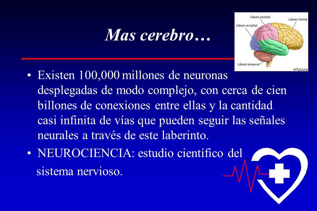Mas cerebro…