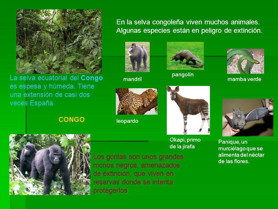 En la selva congoleña viven muchos animales