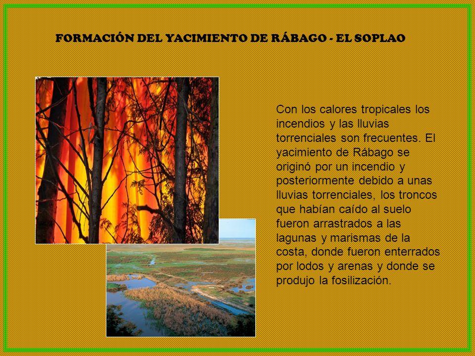 FORMACIÓN DEL YACIMIENTO DE RÁBAGO - EL SOPLAO
