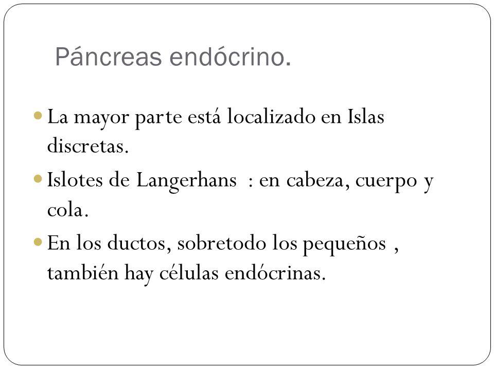 Páncreas endócrino. La mayor parte está localizado en Islas discretas.