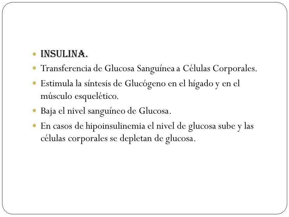 Insulina. Transferencia de Glucosa Sanguínea a Células Corporales. Estimula la síntesis de Glucógeno en el hígado y en el músculo esquelético.
