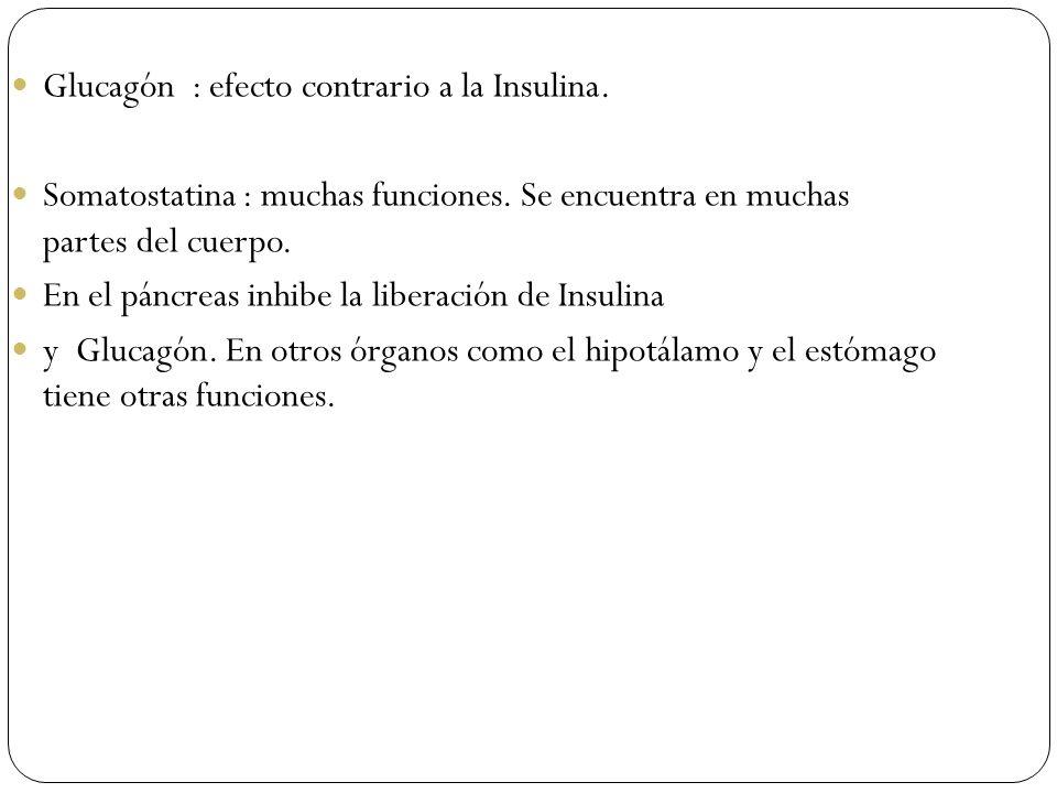 Glucagón : efecto contrario a la Insulina.