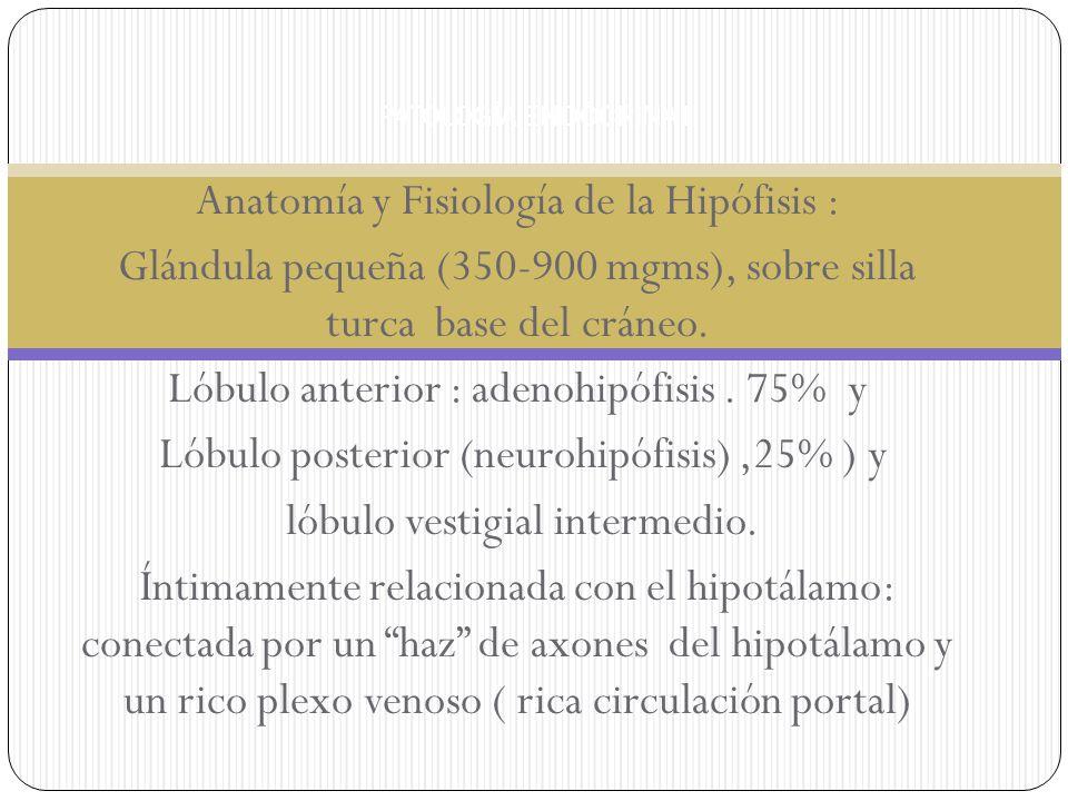 Anatomía y Fisiología de la Hipófisis :