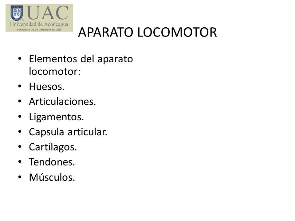 APARATO LOCOMOTOR Elementos del aparato locomotor: Huesos.