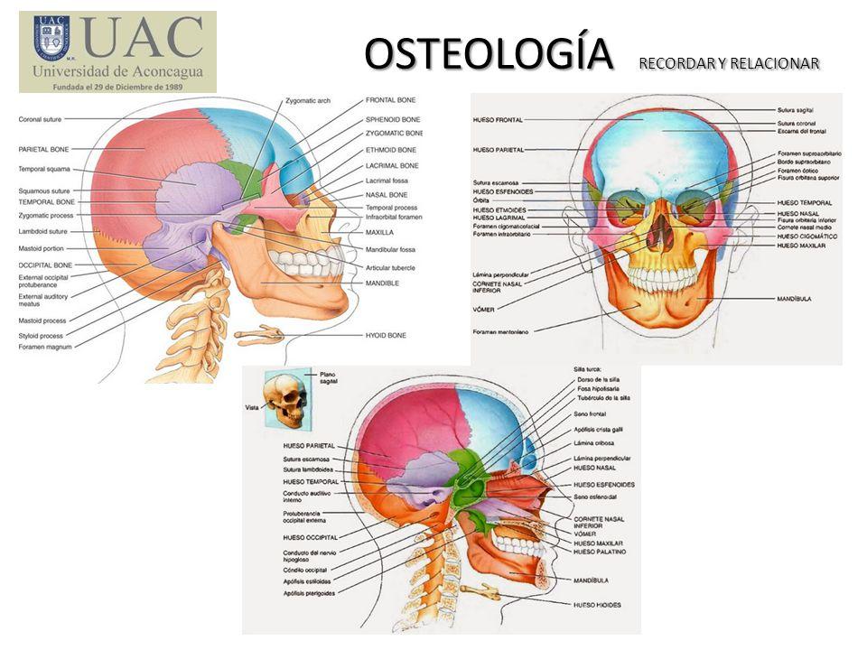 OSTEOLOGÍA RECORDAR Y RELACIONAR