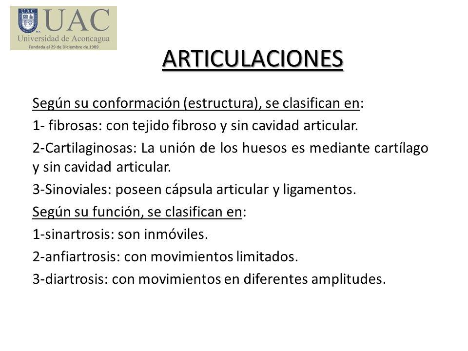 ARTICULACIONES Según su conformación (estructura), se clasifican en: