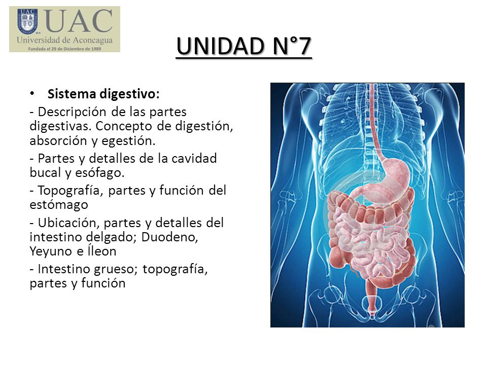 UNIDAD N°7 Sistema digestivo: