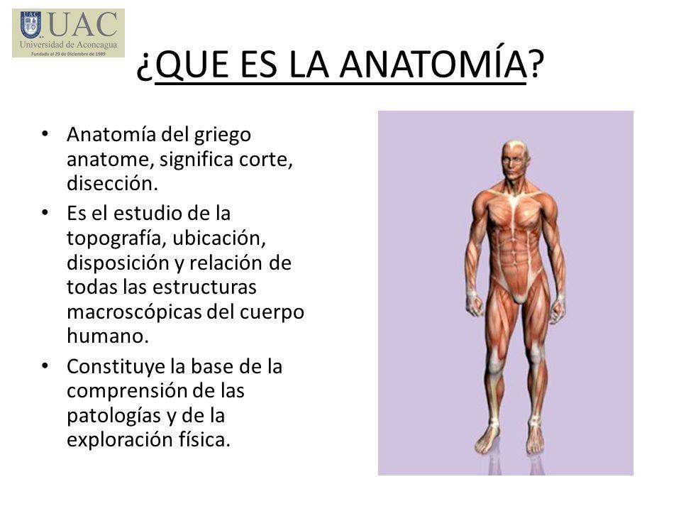 ¿QUE ES LA ANATOMÍA Anatomía del griego anatome, significa corte, disección.