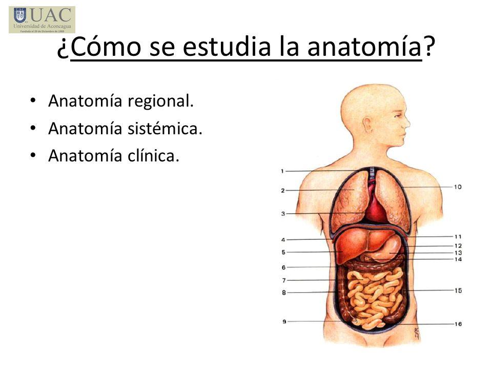 Perfecto Cuál Es La Anatomía Regional Ornamento - Anatomía de Las ...