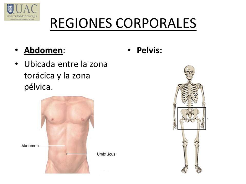 REGIONES CORPORALES Abdomen:
