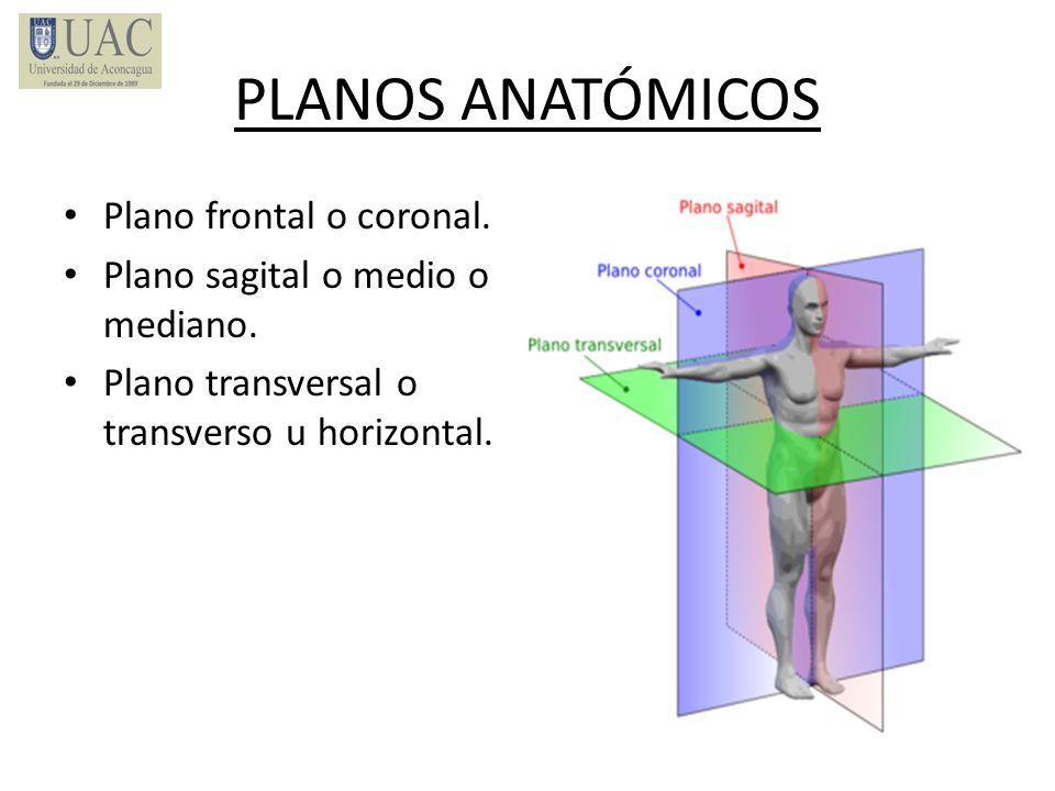 PLANOS ANATÓMICOS Plano frontal o coronal.